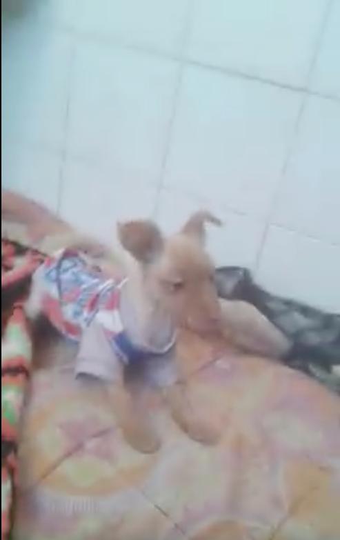 La nostra piccola N.P., cagnolina speciale