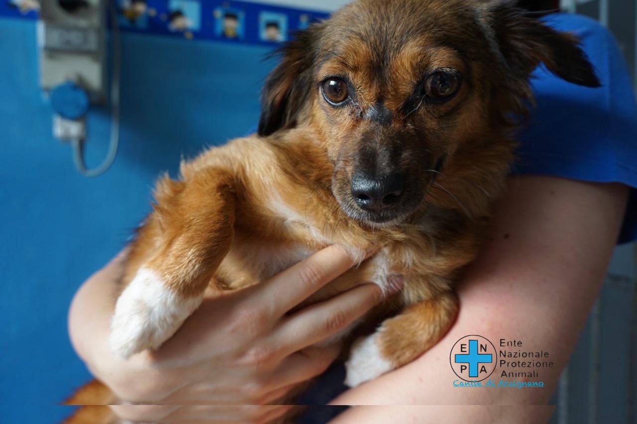 Enpa Arzignano per Save the Dogs