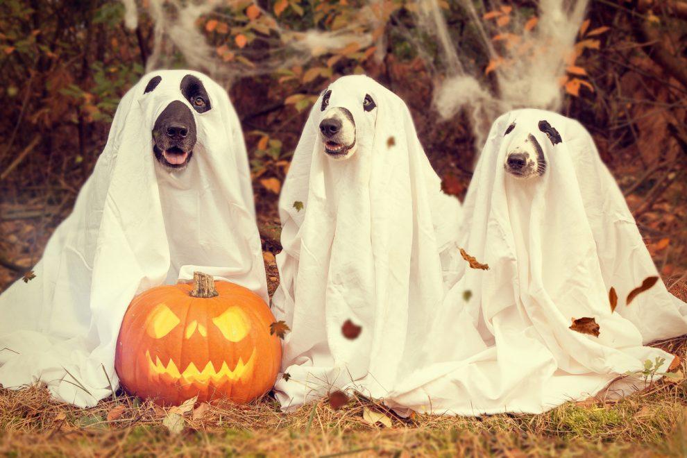 Il concorso fotografico di Halloween
