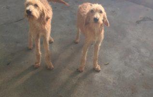 Sora Lella & Buzzi